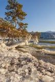 Mountain湖杉木冰波浪 库存照片