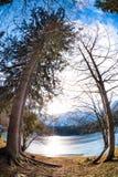 Mountain湖树 图库摄影