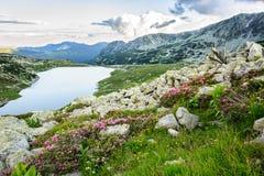 Mountain湖Bucura,在Retezat,罗马尼亚,欧洲 库存照片