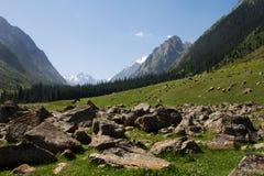 Mountain. Snow lay on peak of mountains, green grass royalty free stock photos