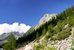 Mountain. With pine trees and blue sky Royalty Free Stock Images