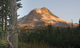 Mountain Hood Close up Timberline Ridge Sunrise Stock Photography
