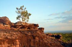 The Mountain. Tree on the mountain thailand Stock Image