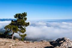Mountain Ai-Petri. Pine trees on the mountain Ai-Petri royalty free stock photography
