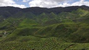 Mountain. All mountain tea grown here Stock Photos