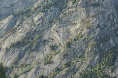 Mountain alps granite wall. Details of a granite mountain with pine tree in the Val di Mello alpine valley in north Italy royalty free stock images