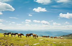 Mountain Altai. Royalty Free Stock Images