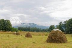 Mountain Altai. Skew hay collected in haystack Stock Photos