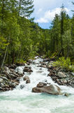 Mountain Altai. Stream falls in river Akkem.Russia Royalty Free Stock Images