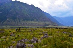 Mountain Altai. The valley of the river Chulcha royalty free stock image