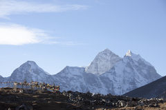 Mountain Ama Dablam Royalty Free Stock Photography
