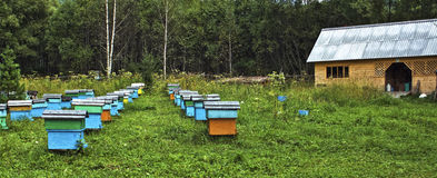 On the mountain apiary. Located in the taiga, in the mountains surrounding Teletskoe Lake, Gorny Altai, Russia Royalty Free Stock Images