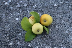 Mountain apples. Apples with Baidar pass is a mountain pass in the Crimea Stock Photography