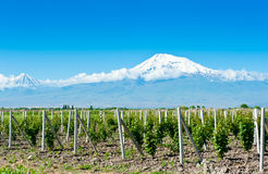 Mountain Ararat. In sunny day Royalty Free Stock Photo