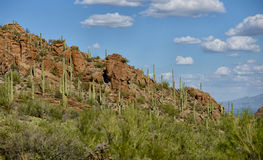 Mountain in arizona with cacti Stock Images