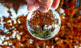 A Mountain Ash In All Its Regal Autumn Colors. A beautiful Mountain Ash at the apex of its autumn colors through the lens ball stock images