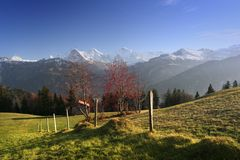 Mountain ash in Alps. View of the Swiss alps: Beautiful old village,  Interlaken, central Switzerland Stock Photo