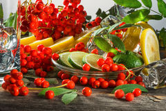 Mountain ash berries on branches with leaves and the cut citrus fruits  ice pieces  a table Royalty Free Stock Photography