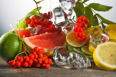 Mountain ash berries on branches with leaves and the cut citrus fruits  ice pieces. Mountain ash berries on branches with leaves and the cut citrus fruits with Royalty Free Stock Photos