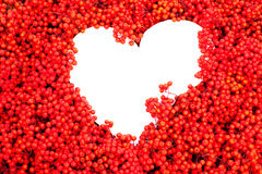 Mountain Ash Berries with heart-shaped copyspace Royalty Free Stock Images