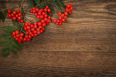 Mountain ash berries over wood Royalty Free Stock Photo