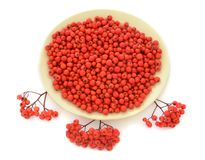 Mountain ash on a plate Royalty Free Stock Photo