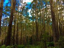 Mountain ash trees Royalty Free Stock Photo