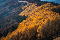 Mountain autumn Royalty Free Stock Photography