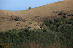 Mountain in autumn. Dry grass and forest, along with a broken farm cottage in Cindrel Mountains, near Paltinis, Sibiu Stock Photography
