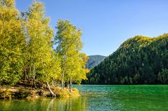 Mountain autumn green siberia lake with reflection and birch. Russia Stock Image