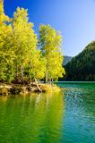 Mountain autumn green siberia lake with reflection and birch. Russia Royalty Free Stock Photos