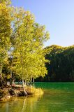 Mountain autumn green siberia lake with reflection and birch. Russia Royalty Free Stock Photography