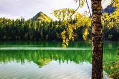 Mountain autumn green siberia lake with reflection and the branch of a birch. Russia Royalty Free Stock Photos