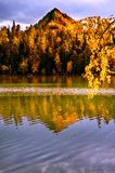 Mountain autumn green siberia lake with reflection and the branch of a birch. Russia Royalty Free Stock Images