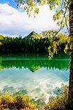 Mountain autumn green siberia lake with reflection and the branch of a birch. Russia Stock Photography