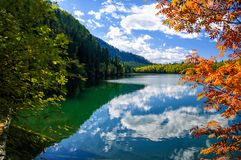 Mountain autumn green siberia lake with reflection and red rowan. Russia Stock Photography