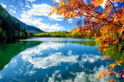 Mountain autumn green siberia lake with reflection and red rowan. Russia Royalty Free Stock Image