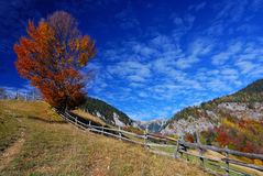 Mountain autumn landscape royalty free stock image
