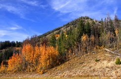 Mountain autumn landscape Stock Image