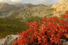 High mountain autumn landscape royalty free stock image