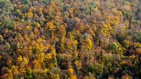 Mountain autumn landscape with colorful deciduous forest. Colorful autumn trees with yellowed foliage in the autumn forest Royalty Free Stock Image
