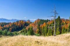 Mountain autumn landscape with colorful forest Royalty Free Stock Image