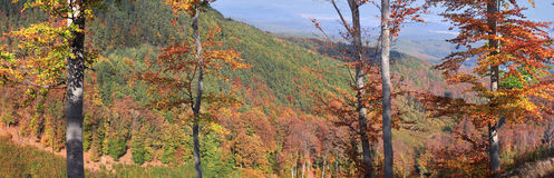 The mountain autumn landscape. The mountain autumn landscape with colorful forest Royalty Free Stock Images