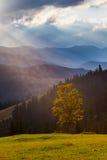 The mountain autumn landscape Stock Image
