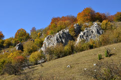 Mountain autumn landscape. With colorful forest Royalty Free Stock Photo