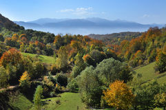 Mountain autumn landscape. With colorful forest Royalty Free Stock Photos