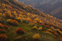 The mountain autumn landscape with colorful forest. The beautiful mountain autumn landscape with colorful forest Stock Image