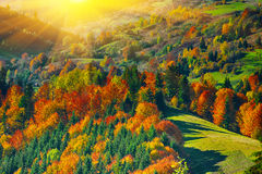 The mountain autumn landscape with colorful forest Stock Images