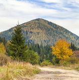 The mountain autumn landscape with colorful forest. Colorful aut. Umn landscape in the Carpathian mountains. Deciduous forest in hills Stock Image