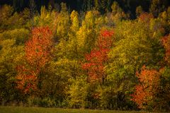 Mountain autumn landscape with colorful forest Stock Photography